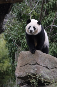 JEROEN JACOBS Madre panda