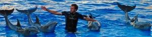PREMIO EXHIBICIONES Despedida de los delfines NOELIA MENA CAÑAVERAL