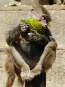 ¡Al rico melón! CRISTINA REGIDOR FERNÁNDEZ