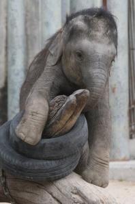 Pequeño elefante JEROEN JACOBS